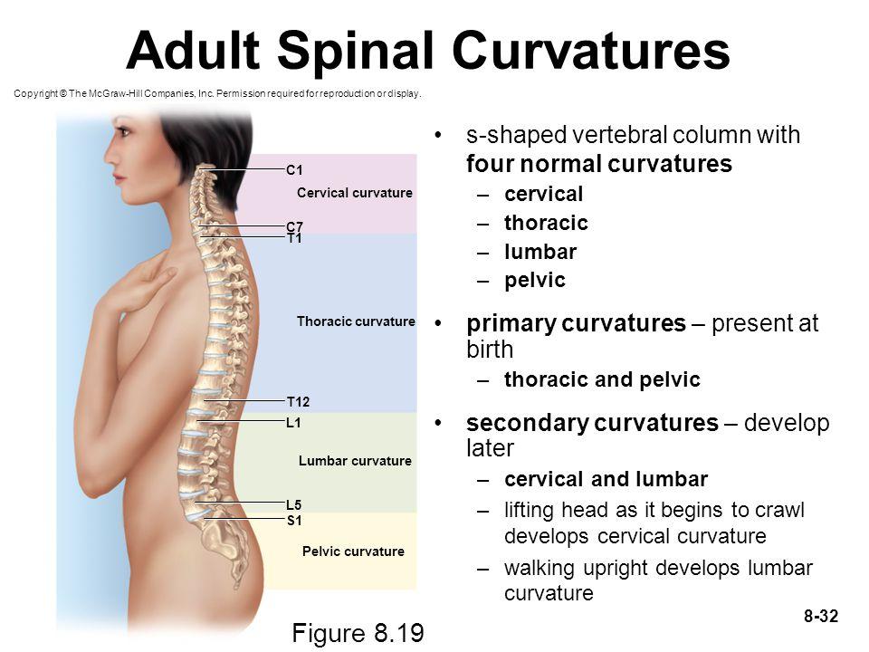 Adult Spinal Curvatures