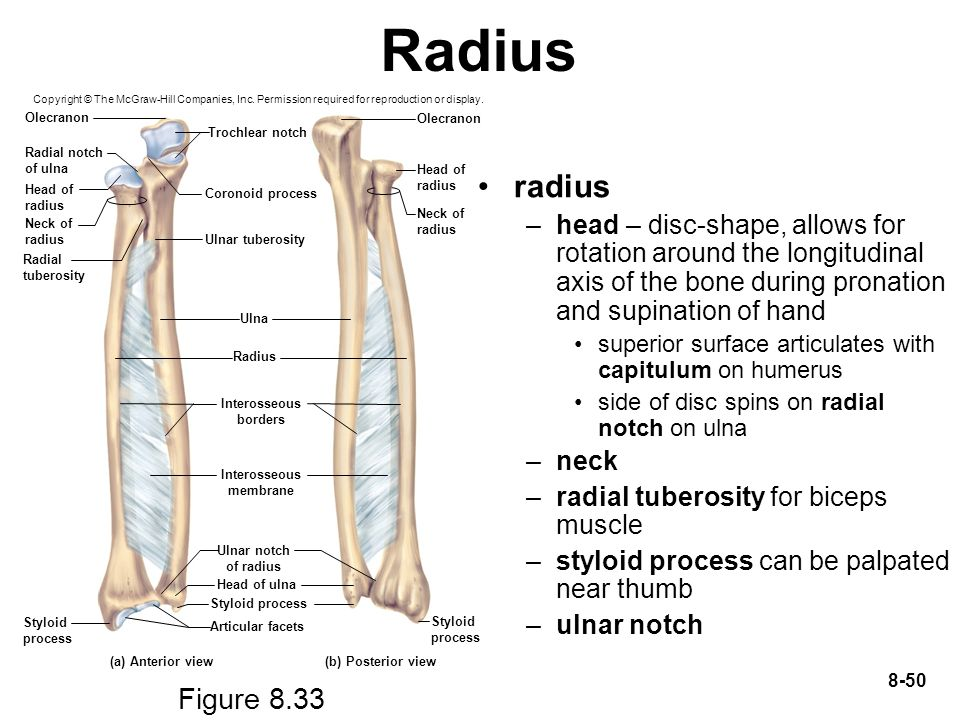 Radius Copyright © The McGraw-Hill Companies, Inc. Permission required for reproduction or display.