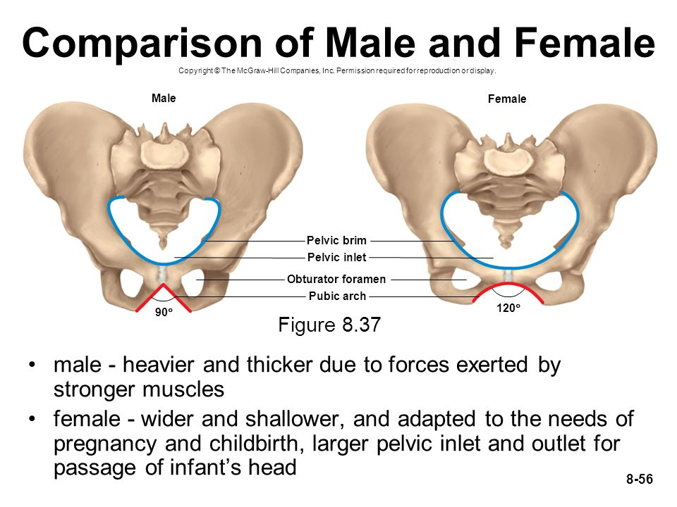 Comparison of Male and Female