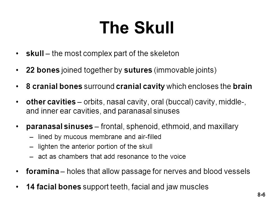 The Skull skull – the most complex part of the skeleton