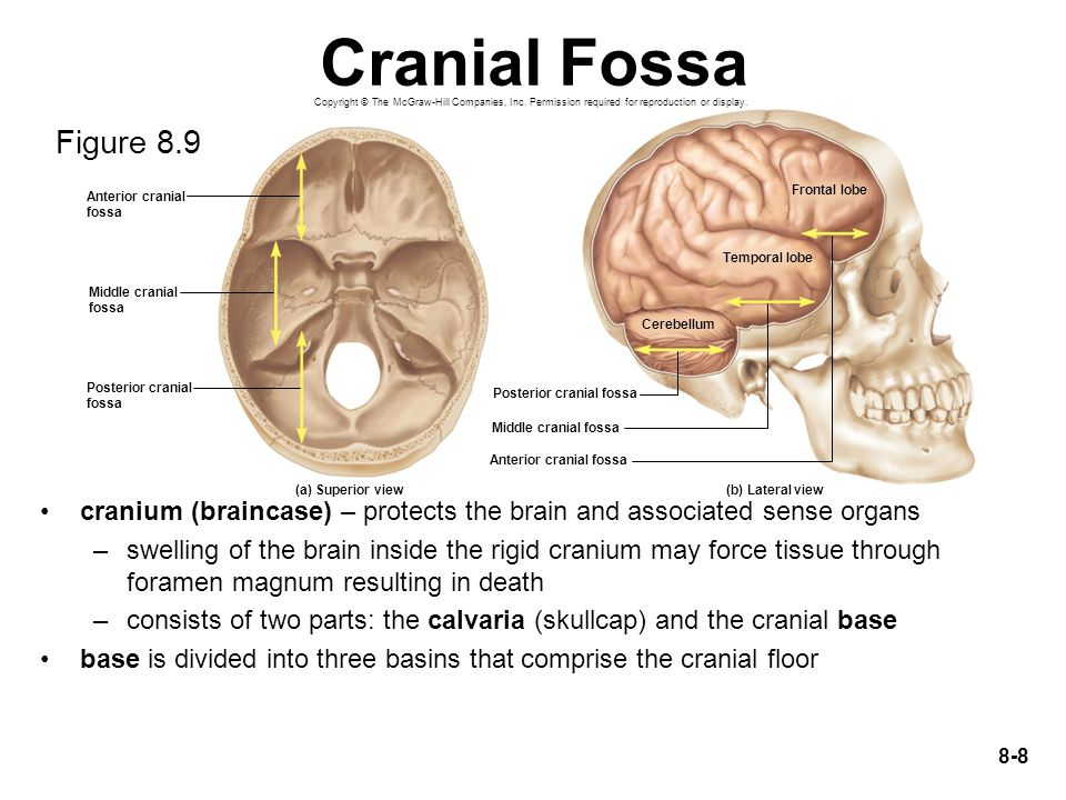 Cranial Fossa Copyright © The McGraw-Hill Companies, Inc. Permission required for reproduction or display.