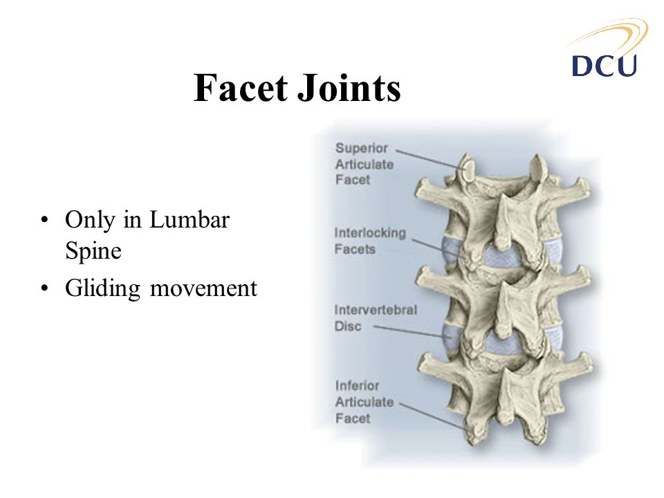 Facet Joints Only in Lumbar Spine Gliding movement