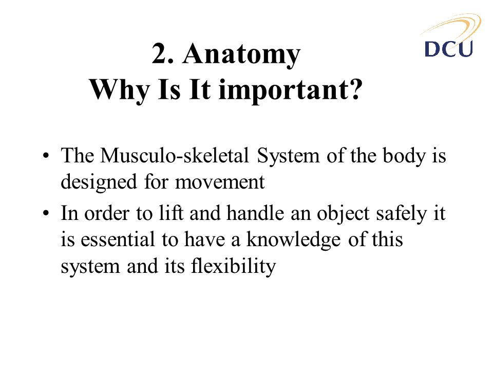 2. Anatomy Why Is It important