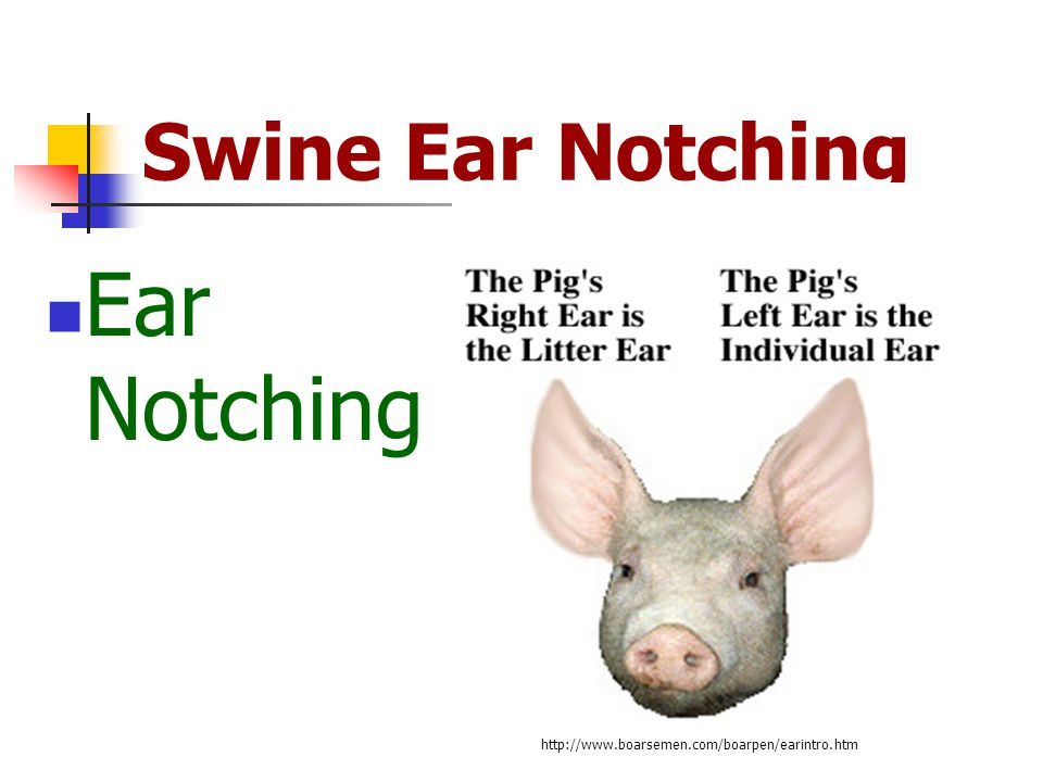Of Mice In Universal Ear Notch Diagram Trusted Wiring Diagram