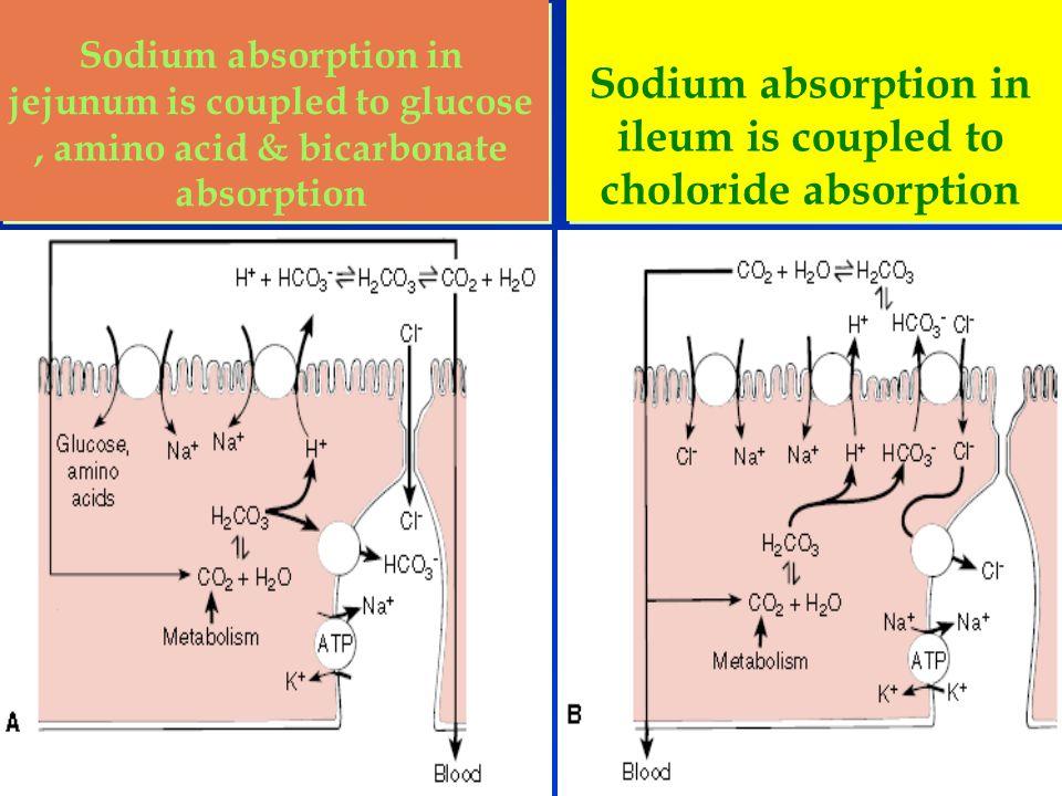 Ileum Function