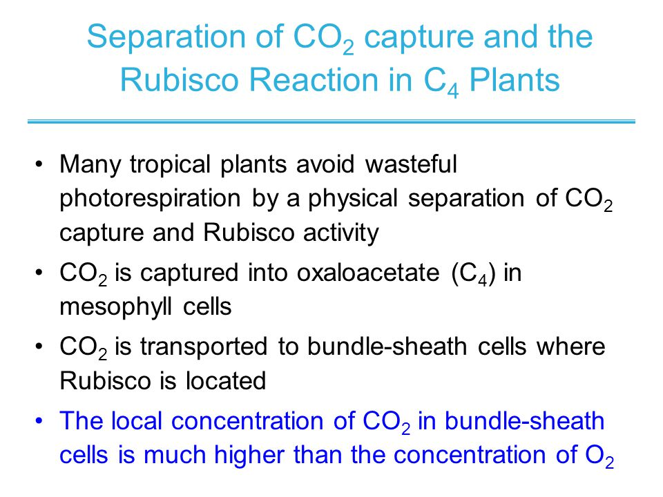 Stoichiometry and Energy Cost of CO2 Assimilation - ppt download