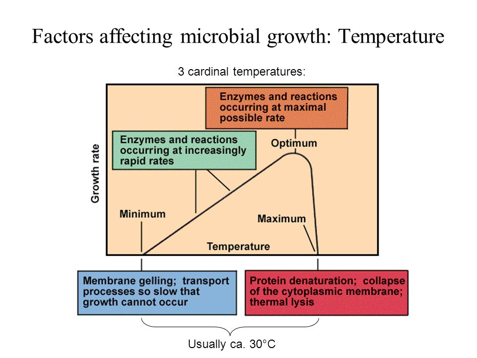 The Effect of Temperature on Bacterial Growth