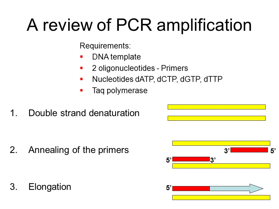 Generation and analysis of aflp data ppt video online for How much template dna for pcr