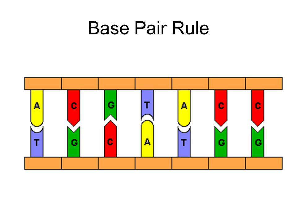 Base Pair Rule