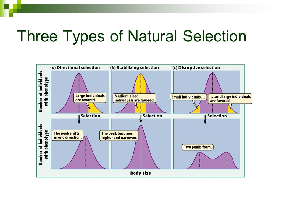 Phenotypes And Natural Selection