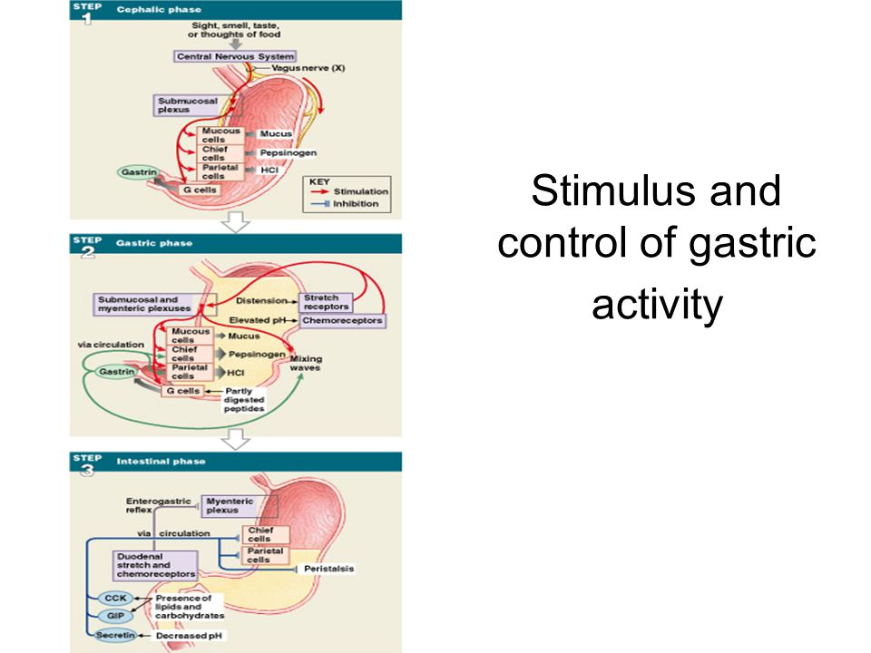 Stimulus and control of gastric activity