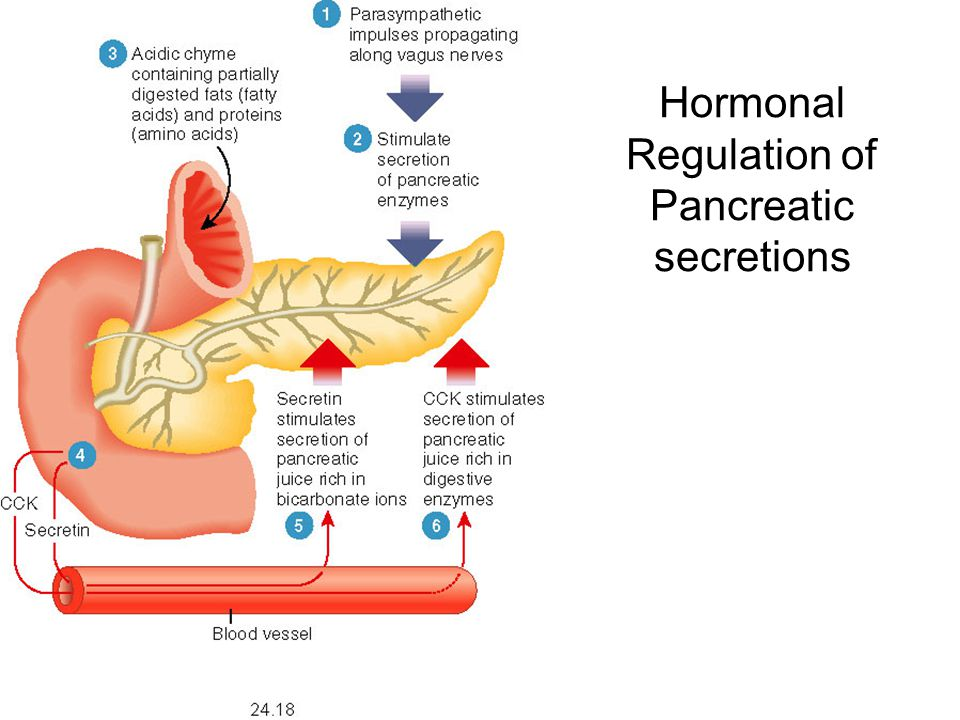Hormonal Regulation of Pancreatic secretions