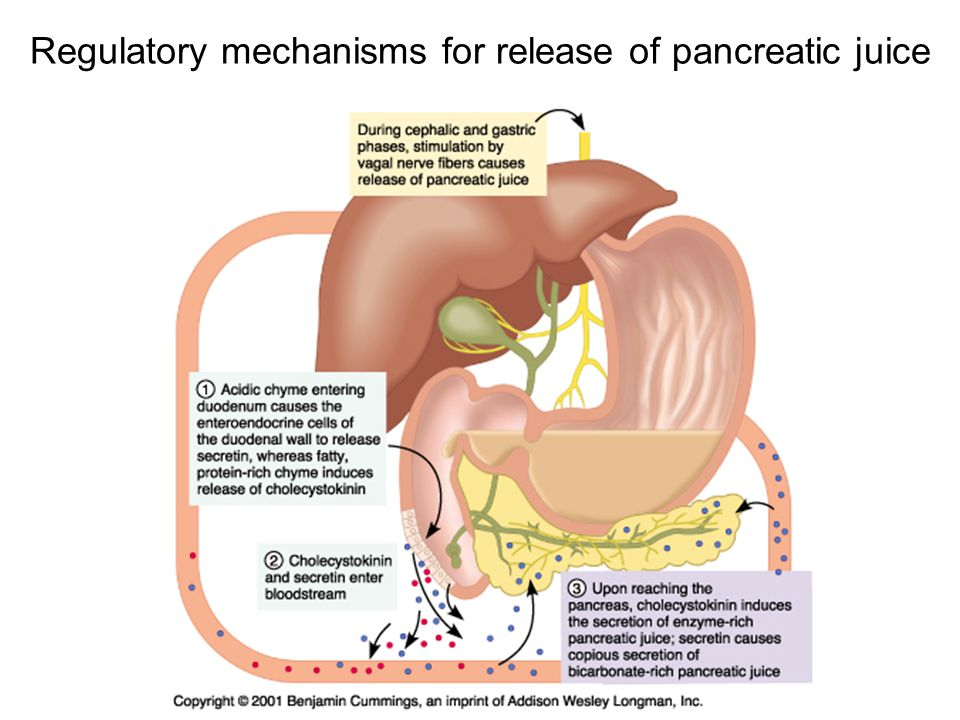 Regulatory mechanisms for release of pancreatic juice