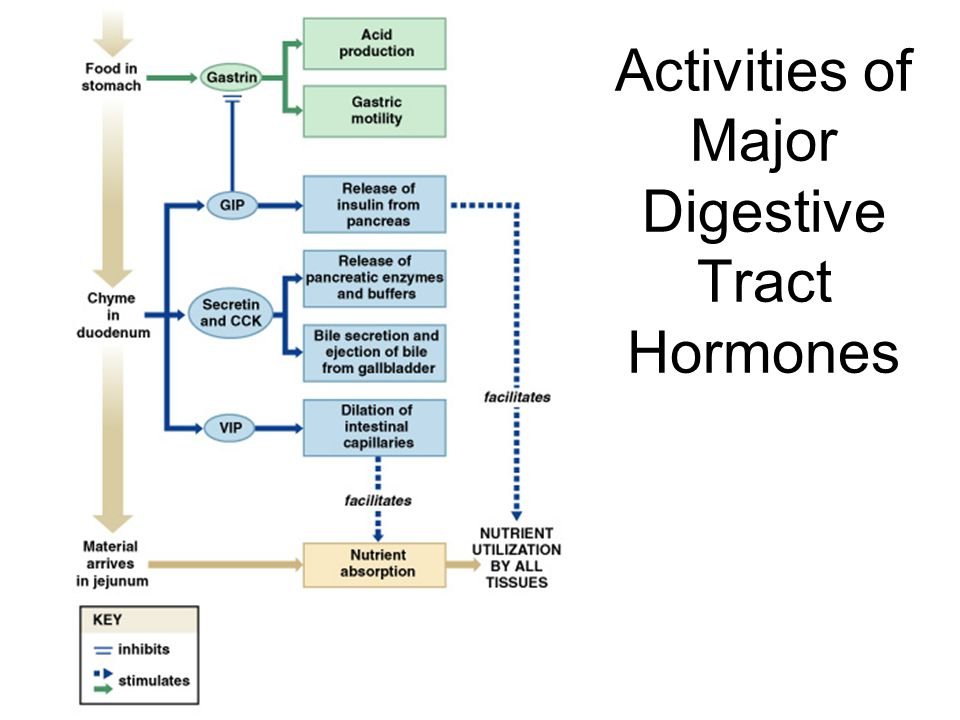 Activities of Major Digestive Tract Hormones
