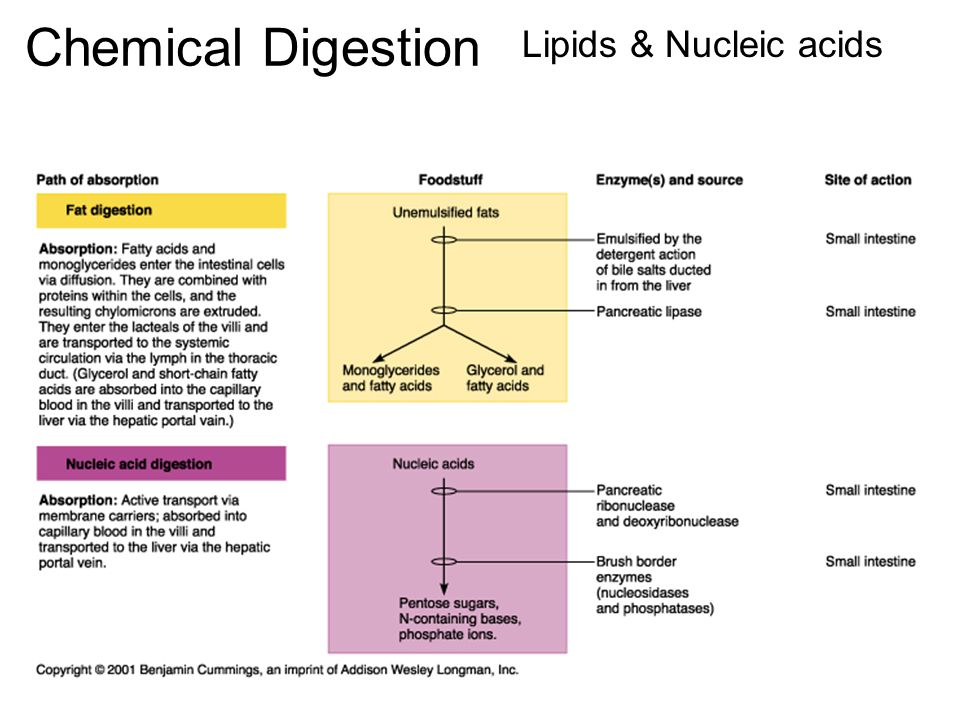 Chemical Digestion Lipids & Nucleic acids