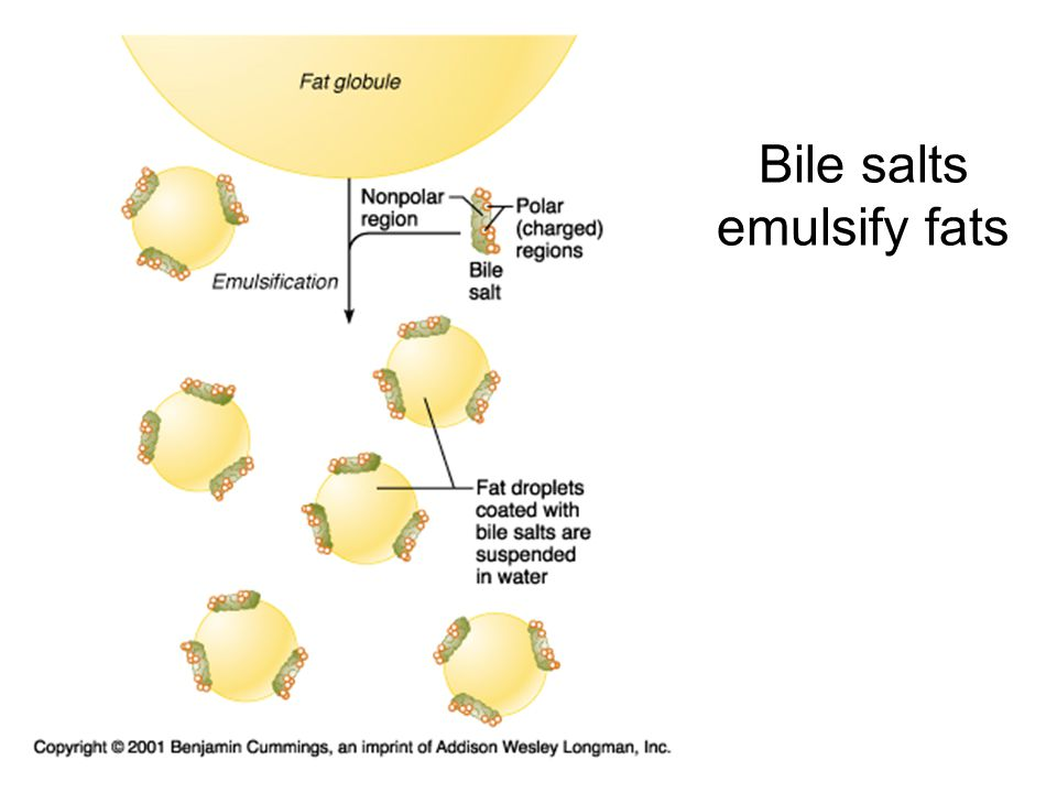 Bile salts emulsify fats