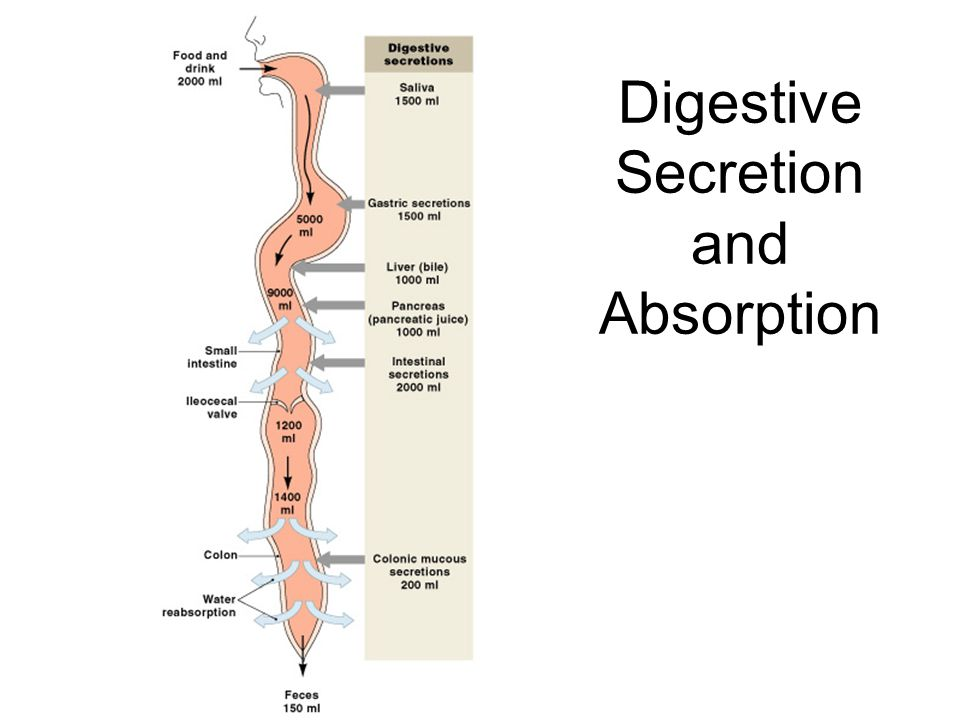 Digestive Secretion and Absorption