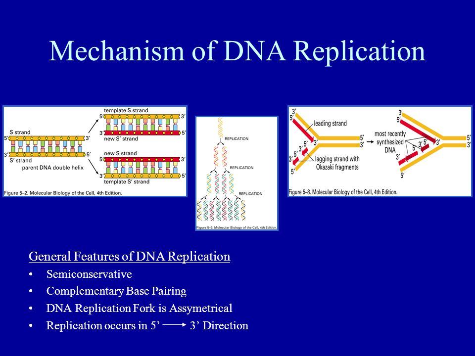 semiconservative replication involves a template what is the template - chapter 5 dna replication repair and recombination