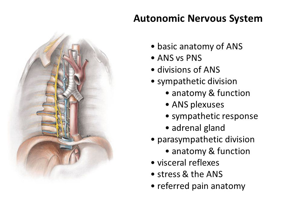 Autonomic Nervous System - ppt video online download