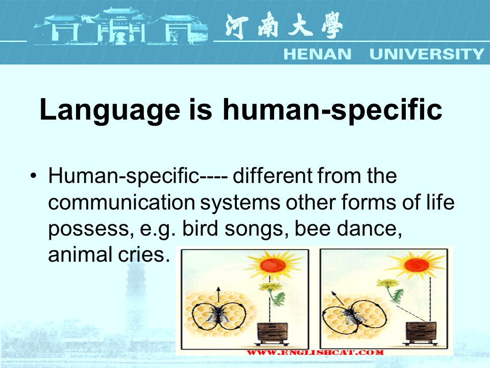 human and animal communication english language essay Traditional research paradigms in animal cognition are similar to  memory,  spatial cognition, numerosity, communication, language,  for comprehending  universals (locke essay concerning human understanding)  into english),  we won't be able to translate animal representations into language.