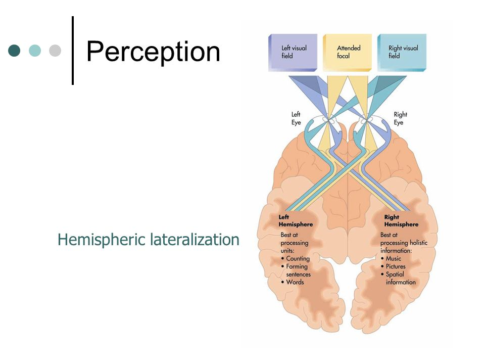 Perception Hemispheric lateralization