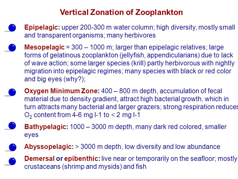 Vertical Zonation of Zooplankton
