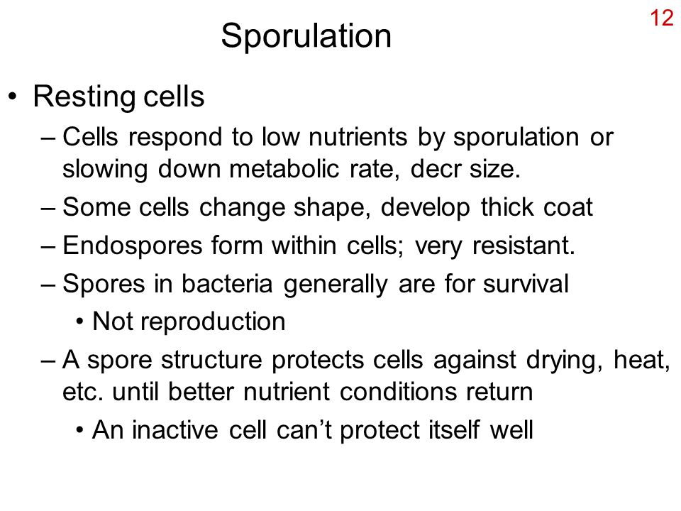 Sporulation Resting cells