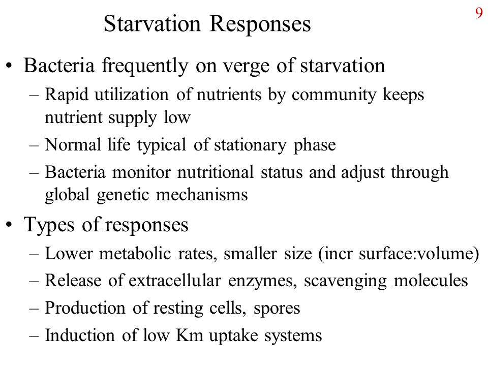 Starvation Responses Bacteria frequently on verge of starvation