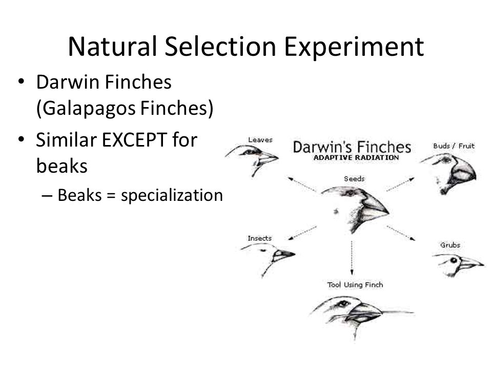 Natural Selection Experiment