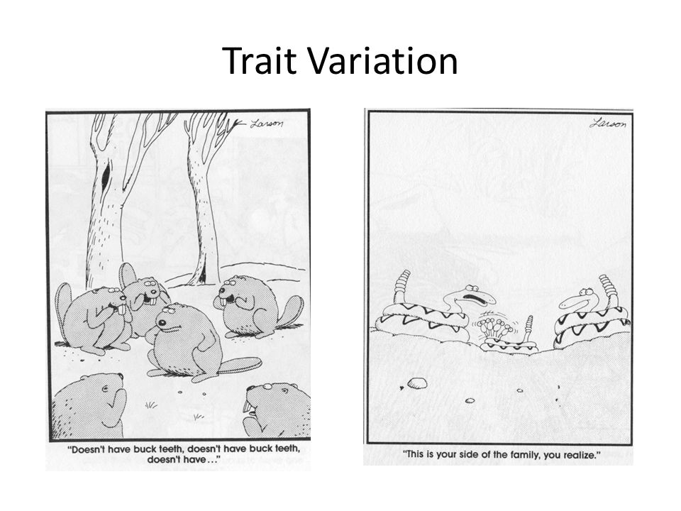Trait Variation