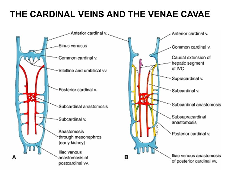 Cardiovascular System Ppt Video Online Download