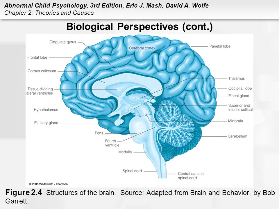 the brain and behavior Nih medlineplus the magazine, the science of addiction drugs, brains, and behavior.