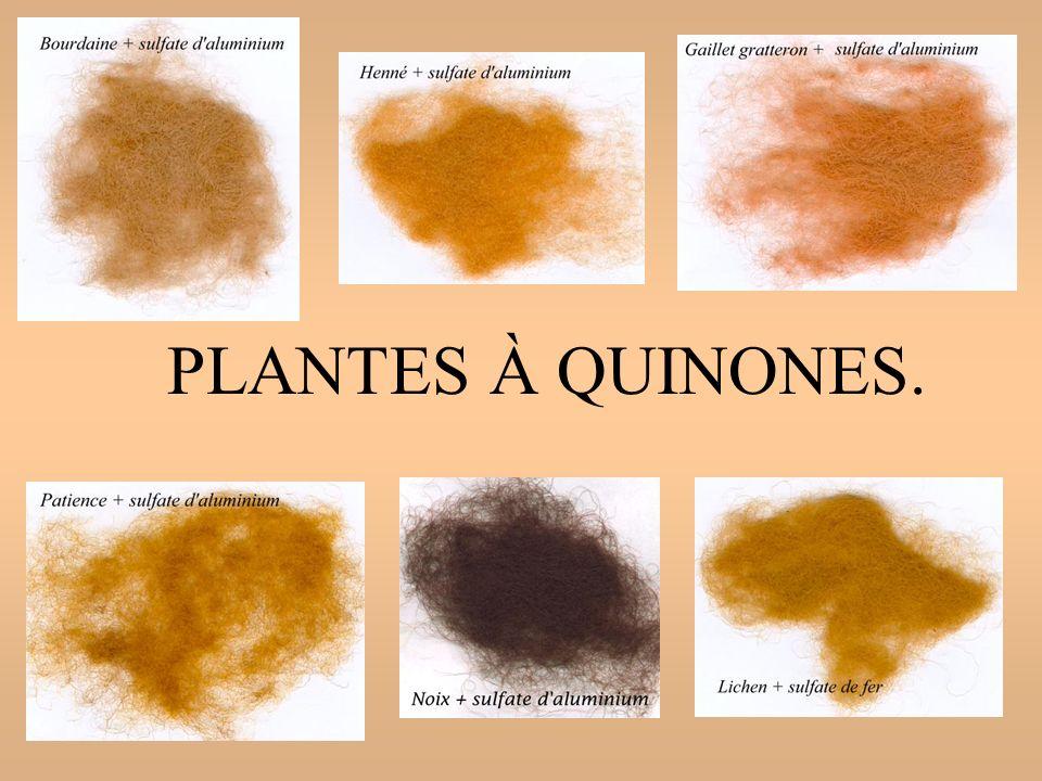 PLANTES À QUINONES.