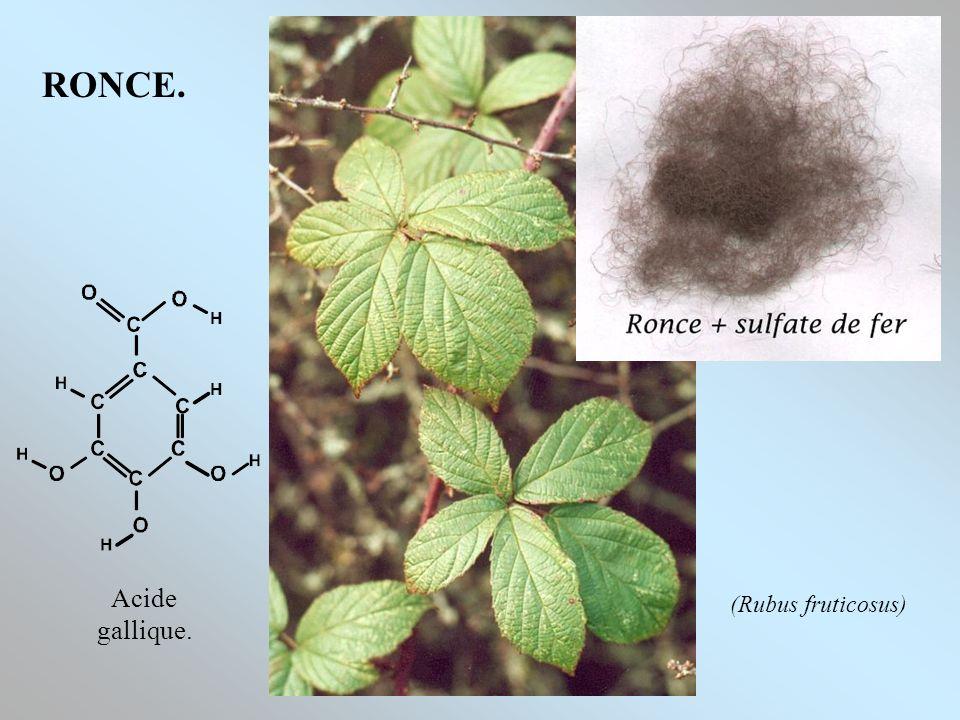 RONCE. Acide gallique. (Rubus fruticosus)