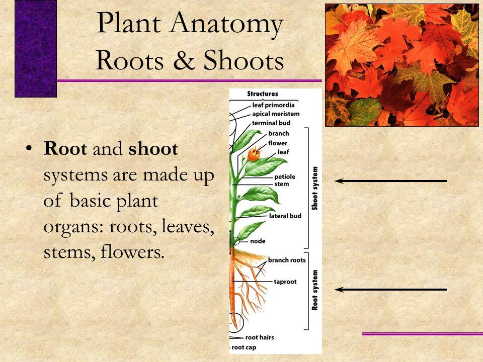 plant anatomy essay
