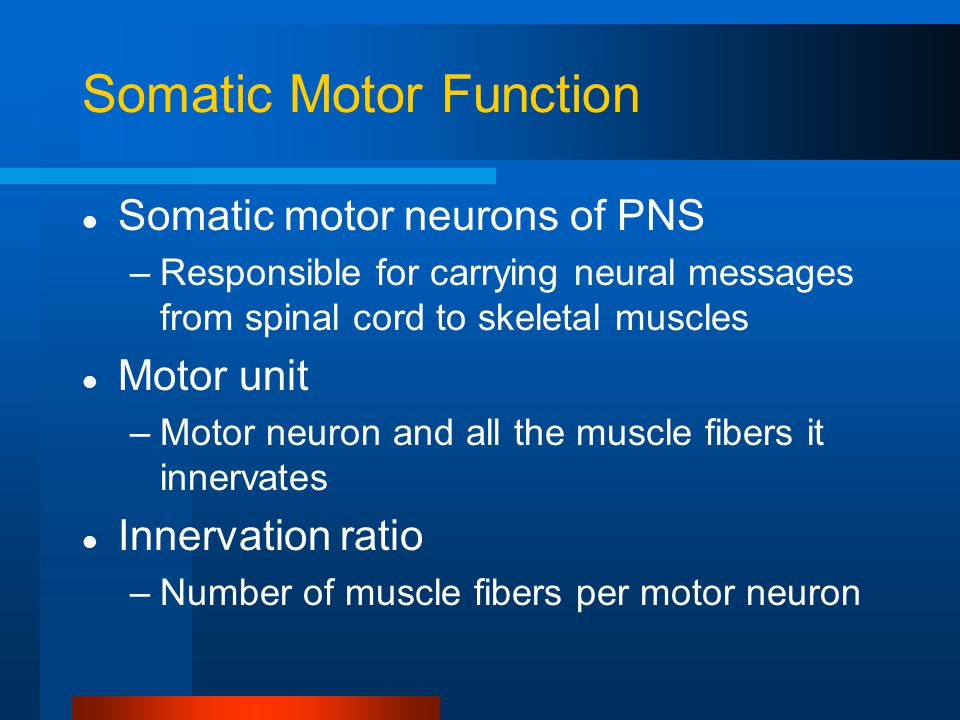 Somatic Motor Function