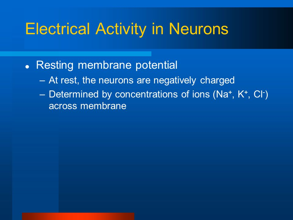 Electrical Activity in Neurons
