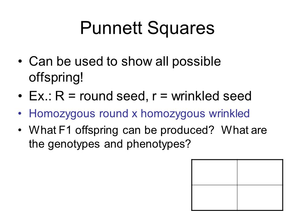 Punnett Squares Can be used to show all possible offspring!