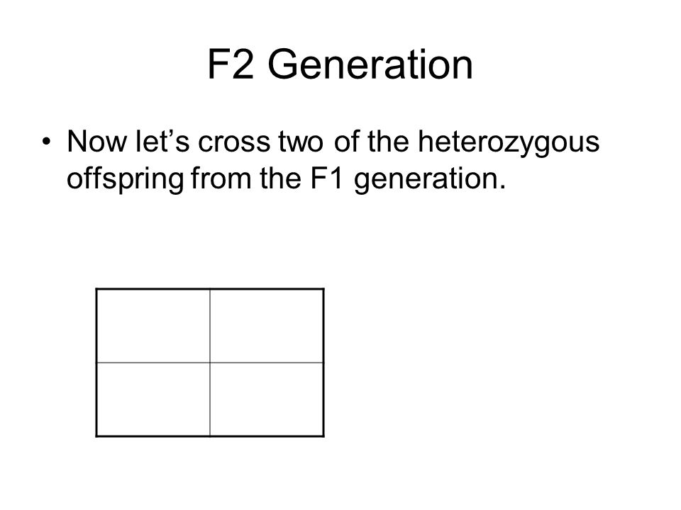 F2 Generation Now let's cross two of the heterozygous offspring from the F1 generation.