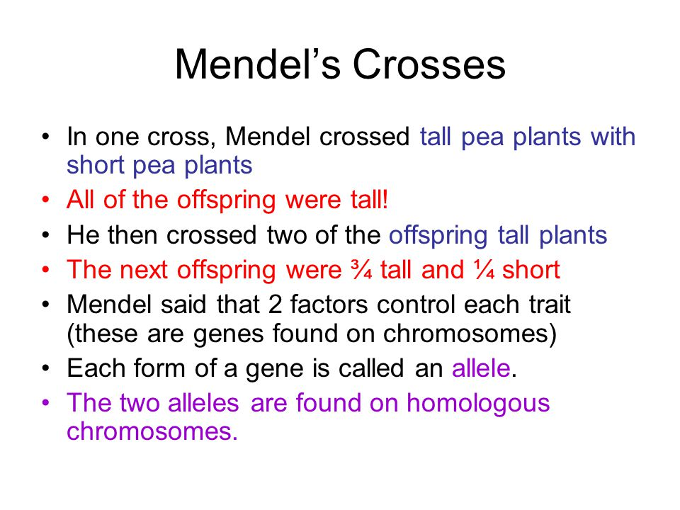 Mendel's Crosses In one cross, Mendel crossed tall pea plants with short pea plants. All of the offspring were tall!