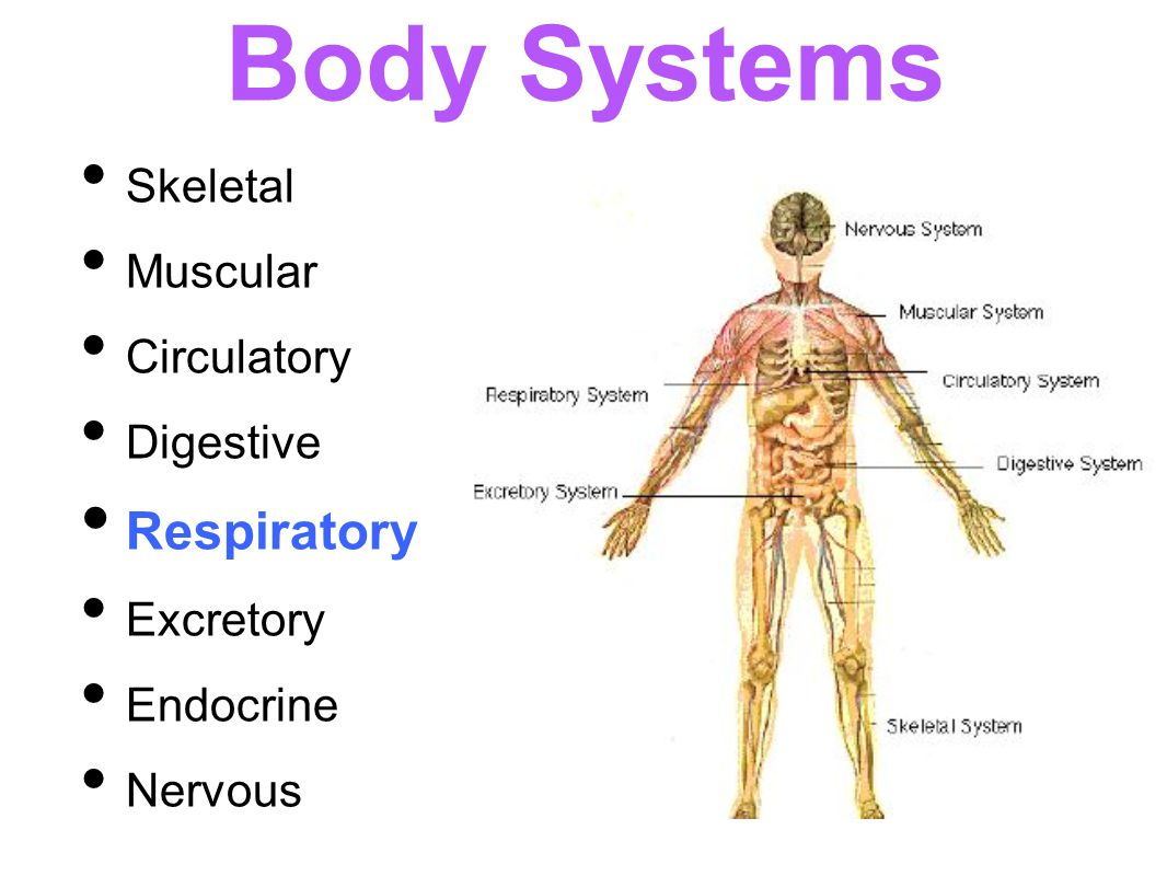 endocrine respiratory and cardiovascular dsorders The endocrine system secretes various hormones, which regulate a variety of functions of the human body this article lists out diseases associated with the endocrine.