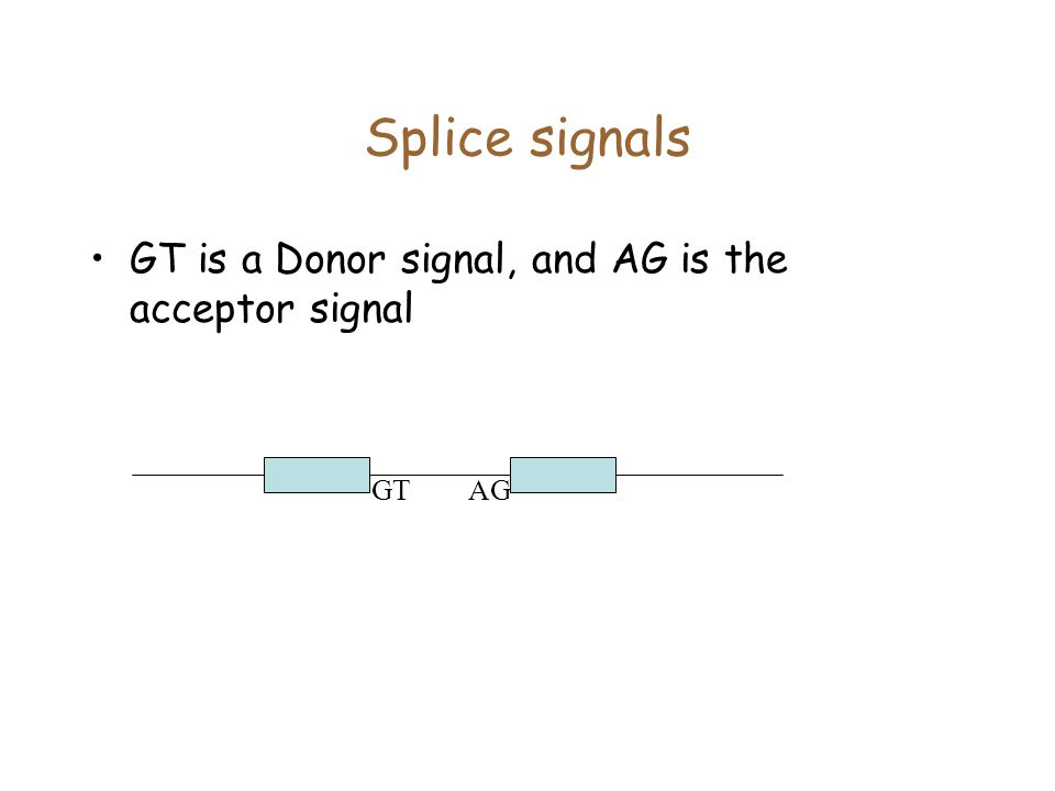 Splice signals GT is a Donor signal, and AG is the acceptor signal GT