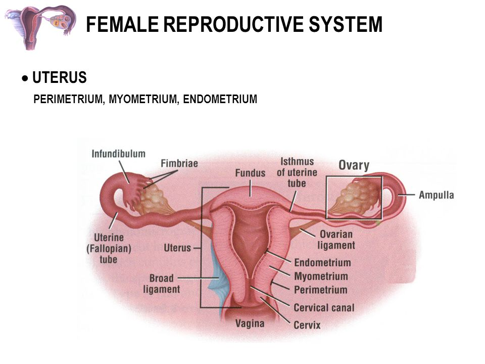 Teens female reproductive system download video