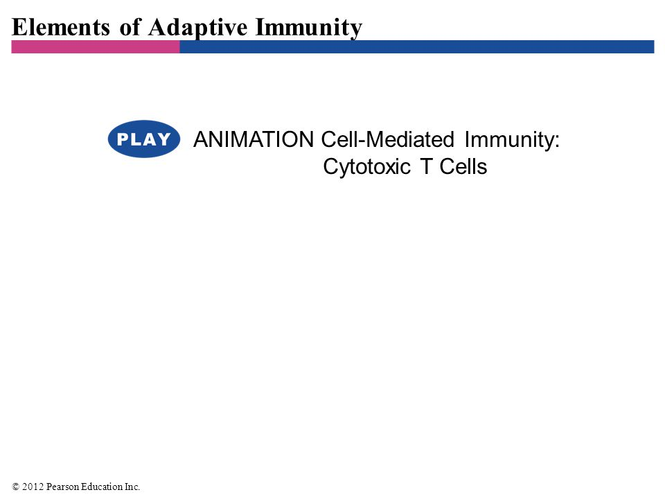Chapter 16 Adaptive Immunity. - ppt video online download
