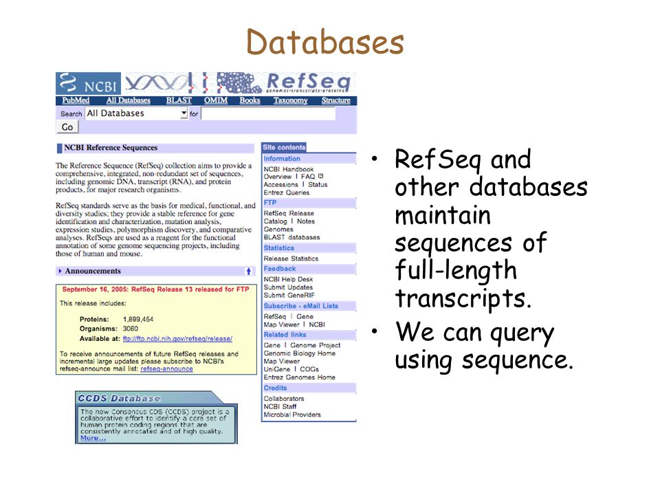 Databases RefSeq and other databases maintain sequences of full-length transcripts.