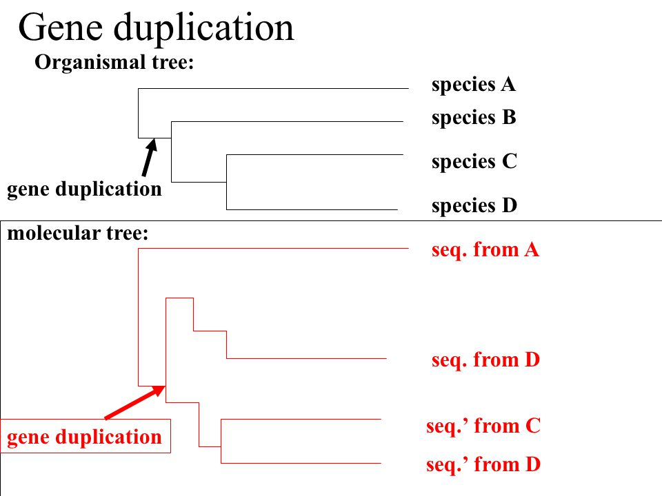 how to make phylogenetic tree online