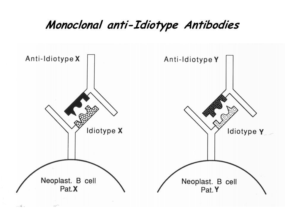 monoclonal antibodies in cancer therapy pdf
