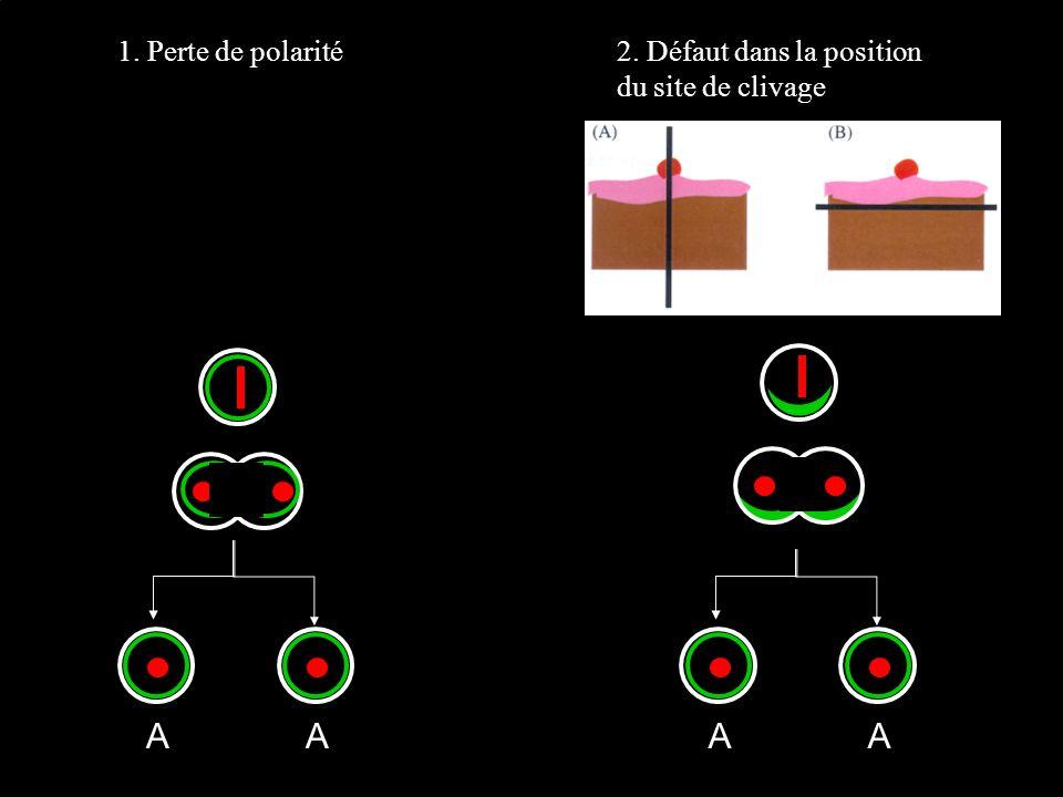 A A A A 1. Perte de polarité 2. Défaut dans la position