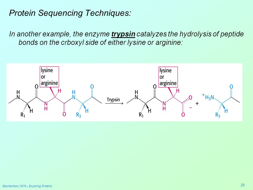 Biochem Amino Acids & Proteins Edward B Walker, Ph.D - ppt