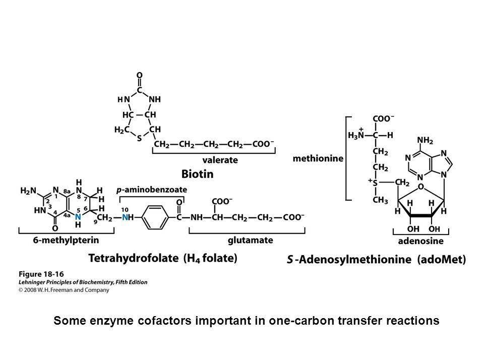 FIGURE (part 2) Urea cycle and reactions that feed amino groups into the cycle. The enzymes ...